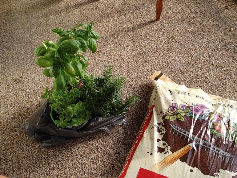 garden_plants_ps